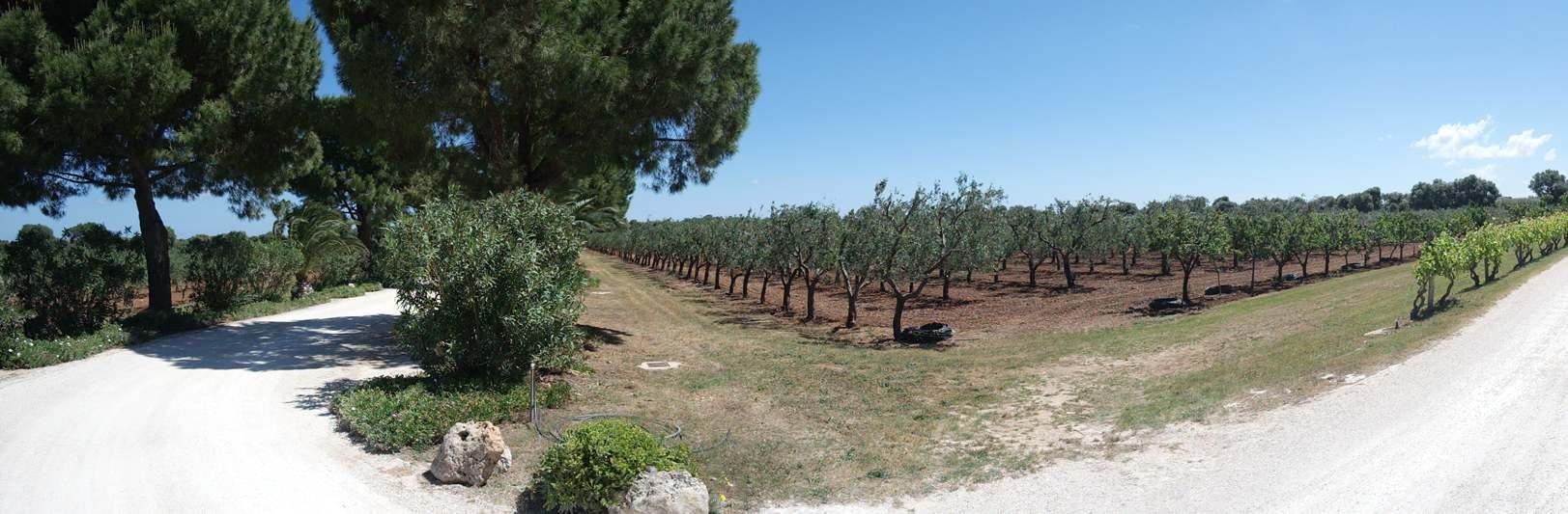 Masseria San Domenico – The Heart of Puglia