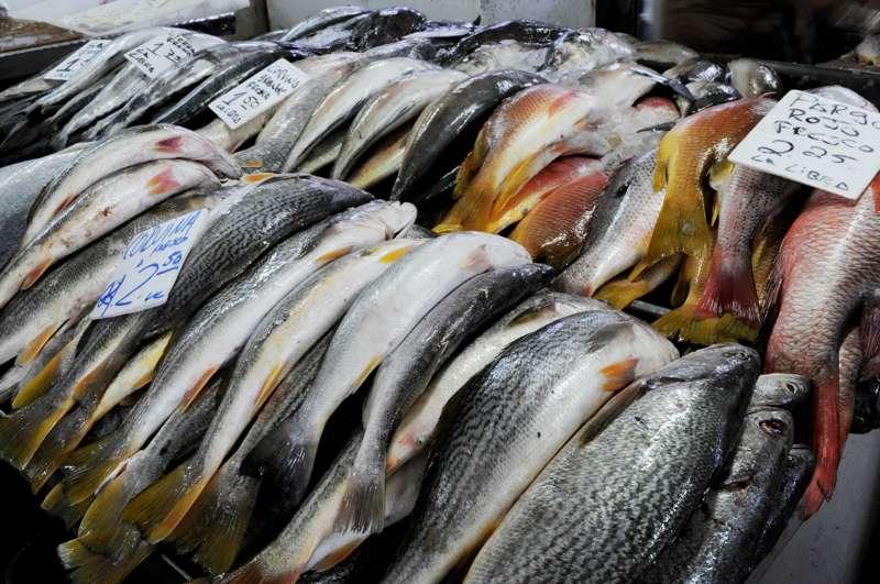 Mercado de Mariscos: Panama City's Seafood Market
