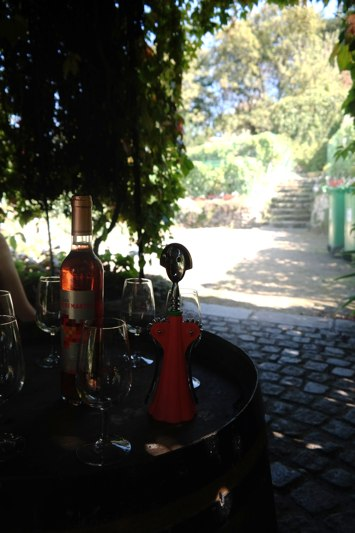 paris - montmarte vineyard
