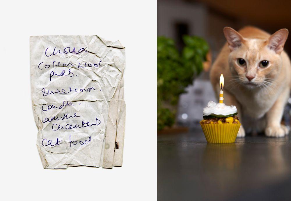 CAT FOOD CUPCAKE - Art meets Culinary Compendium